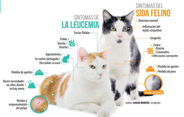 Prevenga en su gato la leucemia y el sida felino la opini n for El sida se contagia por saliva