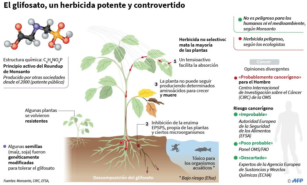 Glifosato, un herbicida polémico en todo el mundo
